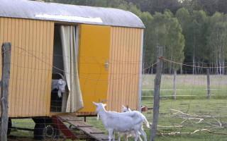 Строим сарай для коз