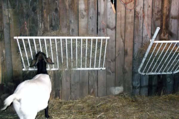 Настенная кормушка для козы