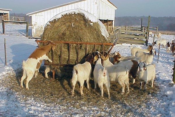 Сено для козы на зиму