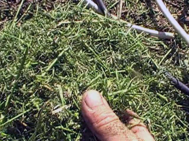Кормление сенажом