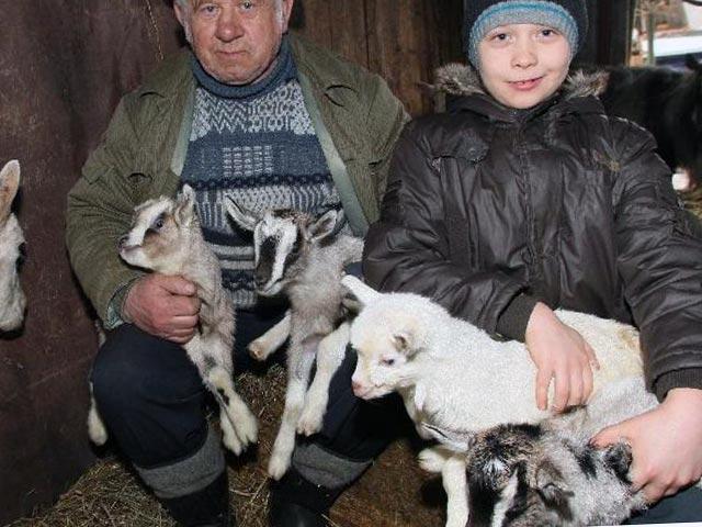 Разведение коз в домашнем хозяйстве