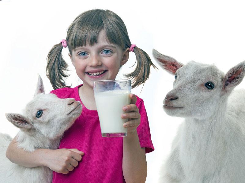 Козье молоко в прикорме малыша