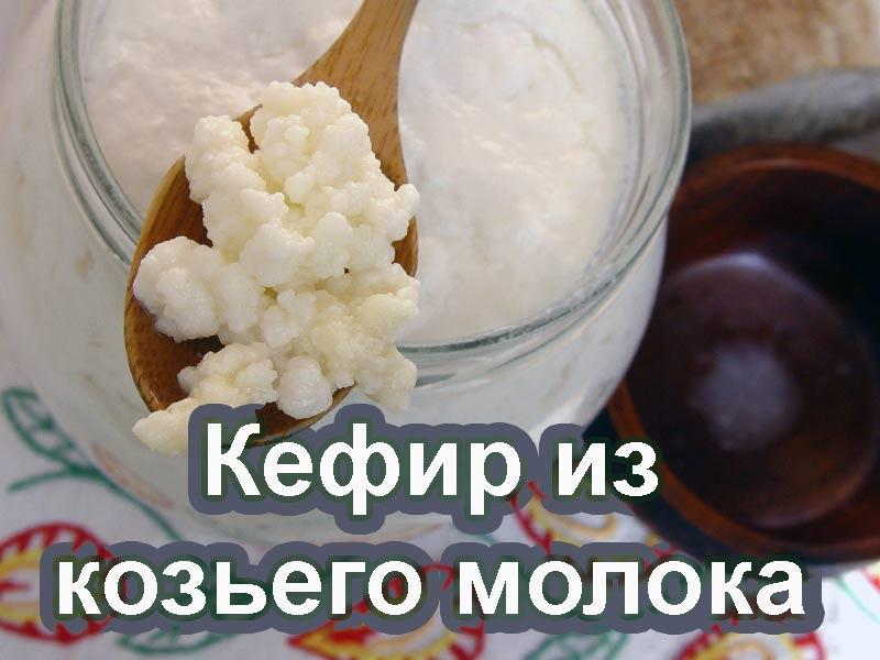 Как приготовить кефир из козьего молока